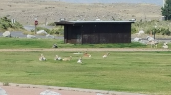 the antelope looking animals at lunch